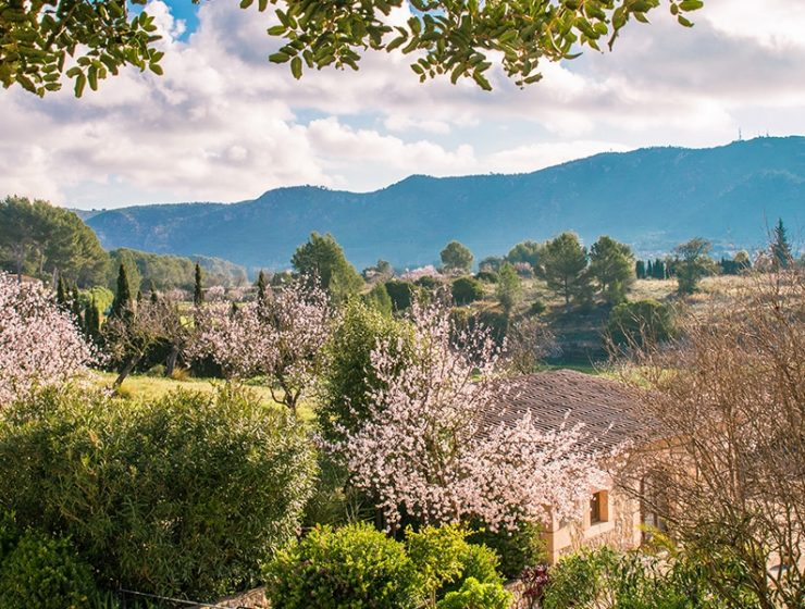 almond blossom fileds 740x560 - 9 Photos to make you want to visit Mallorca in February