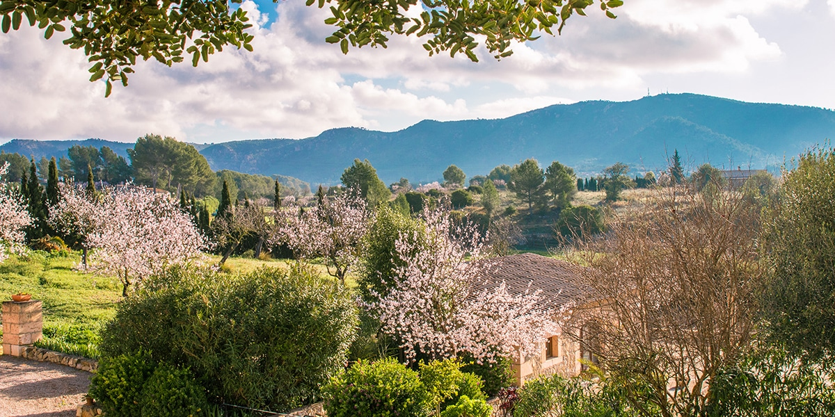 almond blossom fileds - 9 Photos to make you want to visit Mallorca in February